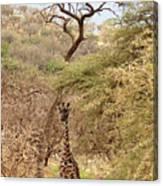 Giraffe Camouflage Canvas Print