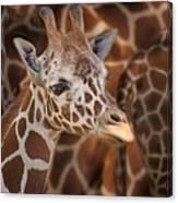 Giraffe - Camouflage Canvas Print