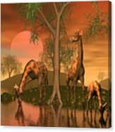 Giraffe Family By John Junek Canvas Print
