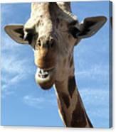 Giraffe Greeting Canvas Print