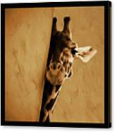Giraffe Hiding  Canvas Print