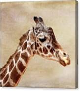 Giraffe Portrait With Texture Canvas Print
