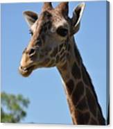 Giraffe Neck Canvas Print