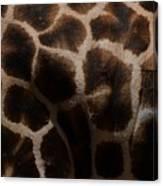 Giraffe Patterns  Canvas Print