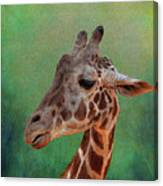 Giraffe Square Painted Canvas Print