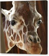 Giraffe Taking A Peek Canvas Print