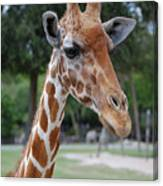 Giraffe Youth Canvas Print