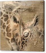 Giraffes, Big And Small Canvas Print