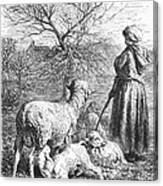 Girl Tending Sheep Canvas Print