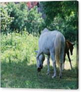 Giverny Mare And Foal Landscape Canvas Print