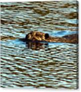 A Swim By Canvas Print
