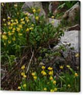 Glacier Lily 4 Canvas Print