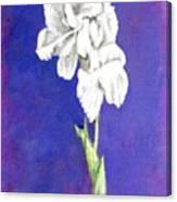 Gladiolus 2 Canvas Print