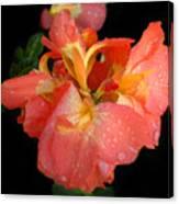 Gladiolus Bloom Canvas Print