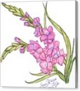 Gladiolus Pink Canvas Print