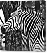 Glamorous In Black And White Canvas Print