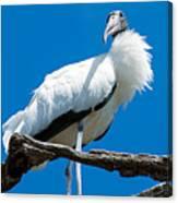 Glamorous Wood Stork Canvas Print