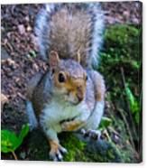 Glasgow Squirrel Canvas Print