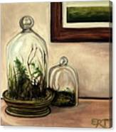 Glass Terrariums Canvas Print