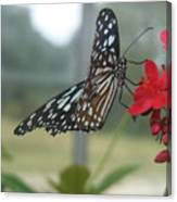 Glass Wing Butterfly Canvas Print
