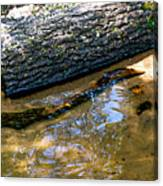 Glassy Water Canvas Print