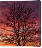Glen Iris Sunrise Canvas Print