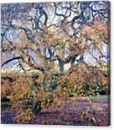 Glen Park Manor Garden Canvas Print