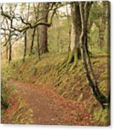 Glengarry Forest Scotland Canvas Print