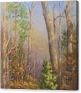 Glenmoor Woods, Sunset Canvas Print