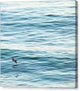 Glider Canvas Print