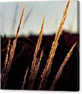 Glistening Grass Canvas Print