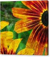 Gloriosa Daisy Canvas Print