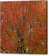 Glorious Autumn Canvas Print