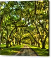 Glorious Entrance Tomotley Plantation South Carolina  Canvas Print