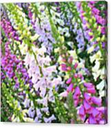 Glorious Foxgloves Canvas Print