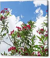 Glorious Fragrant Oleanders Reaching For The Sky Canvas Print