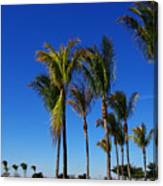 Glorious Palms Canvas Print