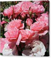 Glorious Pink Roses Canvas Print