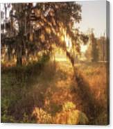 Glorious Sunrise At The Oak Tree Canvas Print