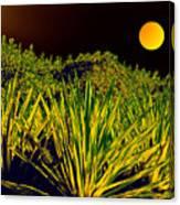 Glow Of Night Canvas Print