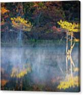 Glowing Cypresses Canvas Print