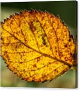 Glowing Fall Leaf Canvas Print