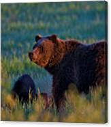 Glowing Grizzly Bear Canvas Print