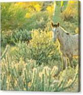 Glowing In The Wild Canvas Print