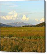 Glowing Meadow Canvas Print