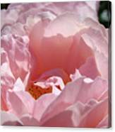 Glowing Pink Rose Flower Giclee Prints Baslee Troutman Canvas Print