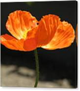 Glowing Poppy Canvas Print