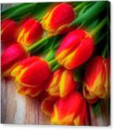 Glowing Tulips Canvas Print