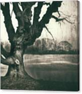 Gnarled Old Tree Canvas Print