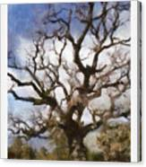 Gnarled Tree Open Sky Canvas Print